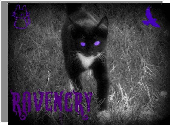sleek black she cat with purple eyes she has a purple stripe on her